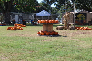 FFA Pumpkin Patch open for business